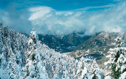 Το παχύ πέπλο χιονιού «καταπίνει» το ελατοδάσος.
