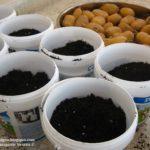 Πως θα φυτέψετε πατάτες Βόνιτσας σε μπαλκόνι της Αθήνας