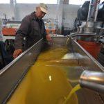 Η διαδικασία παραγωγής ελαιολάδου σε ελαιοτρίβειο στη Ναύπακτο