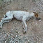 ΣΟΚ: «Ανεγκέφαλοι» σκόρπισαν τον θάνατο με φόλες στον Γαλατά!