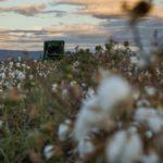 Εικόνες από την συγκομιδή βαμβακιού στον κάμπο Νεοχωρίου