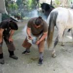 To πετάλωμα και η φροντίδα των αλόγων στο Ευηνοχώρι