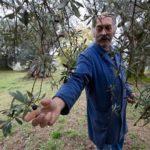 Ενημέρωση στο Μεσολόγγι για τους «εχθρούς» της ελαιοκαλλιέργειας