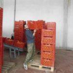 Νέες θέσεις εργασίας από τη «Westland Fruit» στη Γουριά