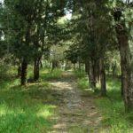Το δάσος του Αγίου Χριστοφόρου «πνεύμονας» πρασίνου για το Αγρίνιο