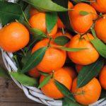 Ημερίδα για την καλλιέργεια εσπεριδοειδών στη Μυρτιά Αιτωλοακαρνανίας