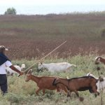Ένα οδοιπορικό στη κοινωνία των κτηνοτρόφων στα χωριά του ορεινού Βάλτου