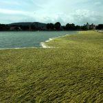 Σε μεγάλο κίνδυνο οι προστατευόμενοι υγρότοποι της Αιτωλοακαρνανίας