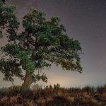 Η ιερή βελανιδιά, το χρυσοφόρο δέντρο του Ξηρομέρου και της Ακαρνανίας