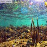 Μια κατάδυση στον μαγευτικό βυθό της λίμνης Τριχωνίδας