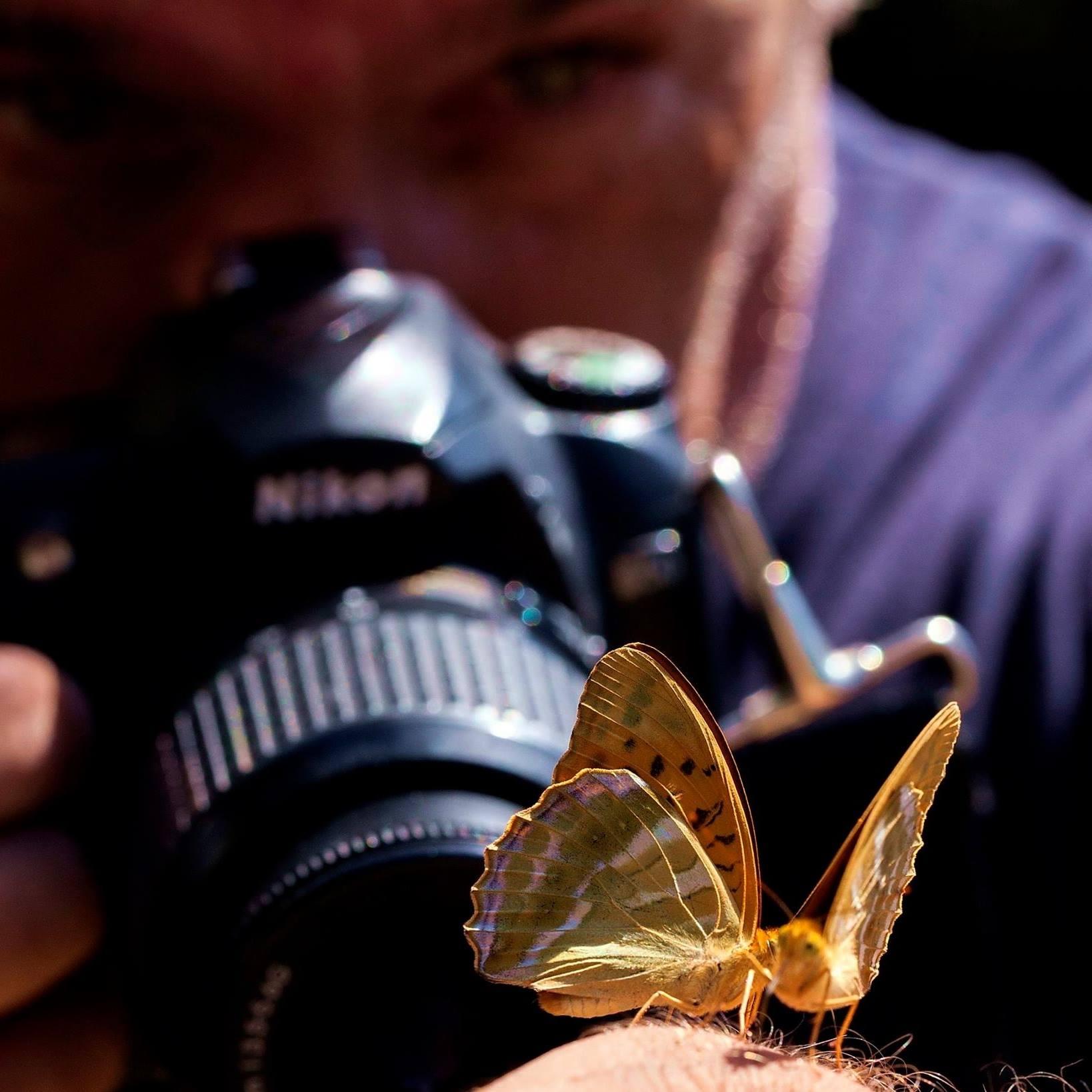 Οι φανταστικές πεταλούδες της ορεινής Ναυπακτίας