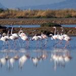Ντοκιμαντέρ για τη λιμνοθάλασσα Μεσολογγίου-Αιτωλικού στην ΕΡΤ2