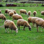 Ημερίδα στην Αμφιλοχία για την κτηνοτροφία