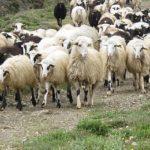 38 εκατ. ευρώ για βιολογική κτηνοτροφία στην Δυτική Ελλάδα
