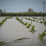 Χιλιάδες στρέμματα «έπνιξε» ο φουσκωμένος Αχελώος στην Αιτωλοακαρνανία