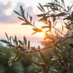 Ευκαιρίες και προοπτικές για την Αγροτική Ανάπτυξη του νομού Αιτωλοακαρνανίας