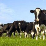 Μέτρο 11 – «Βιολογικές καλλιέργειες»: Φιάσκο η προμελετημένη πλάνη;