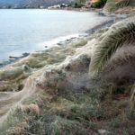 Πρωτόγνωρο: Πέπλο αράχνης 300 μέτρων απλώνεται στο Αιτωλικό! (φωτό)