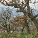 Το βελανιδοδάσος Ξηρομέρου απασχόλησε συνάντηση στο Υπουργείο Περιβάλλοντος