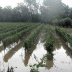 Μεγάλες ζημιές σε βαμβάκια, καλαμπόκια, κηπευτικά και ελιές στις Οινιάδες