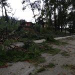 Η νεροποντή έριξε τα δέντρα-ξυράφια στο δασύλλιο του Πενταλόφου
