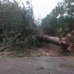 Μαζική πτώση δένδρων προκάλεσε ζημιές στο δημοτικό σχολείο Ματαράγκας