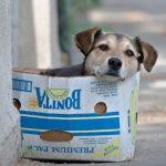 Καλλιτεχνικός διαγωνισμός ζωγραφικής με θέμα τα αδέσποτα ζώα στο Δήμο Αγρινίου