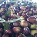 Η Σακοράφα ζήτησε από τον Βορίδη στοιχεία εισαγωγών και εξαγωγών της επιτραπέζιας ελιάς