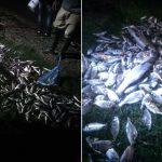 Χιλιάδες ψάρια… βγήκαν στις ακτές του Αιτωλικού!