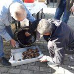 Κοσμοσυρροή για το έθιμο της Τσιγαρίδας σε Φυτείες, Παλιάμπελα και Μοναστηράκι