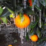 Αναγγελία του ΕΛΓΑ για παγετό στις καλλιέργειες του Δήμου Ι.Π. Μεσολογγίου