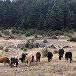 Το Δημοτικό Συμβούλιο Ακτίου-Βόνιτσας δίπλα στους μικρομεσαίους αγρότες και κτηνοτρόφους