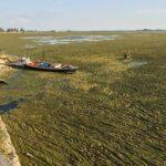 Αντιδράσεις και για τον Βιολογικό Καθαρισμό Αιτωλικού που «νεκρώνει» τη λιμνοθάλασσα!