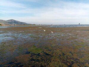 Η λιμνοθάλασσα Αιτωλικού είναι μία Ωρολογιακή Βόμβα που ανά πάσα στιγμή θα εκραγεί!