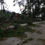Πλήρης αδράνεια και αδιαφορία για την απομάκρυνση των επικίνδυνων δέντρων στο άλσος Πενταλόφου