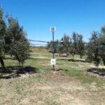 SmartOliveGrove: Άλμα ανταγωνιστικότητας της ελιάς Καλαμών με την ευφυή γεωργία
