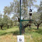 SmartOliveGrove: Η ευφυής γεωργία θεμέλιο για ανταγωνιστικότερη ελιά Καλαμών στην Αιτωλοακαρνανία
