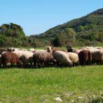 Συνέντευξη Τύπου στο Αγρίνιο για τα εκρηκτικά προβλήματα στην αγροτοκτηνοτροφία