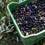 Ξεκινούν εγγραφές μελών στον Αγροτικό Σύλλογο Παραγωγών Ελιάς Καλαμών «Η Αιτωλοακαρνανία»