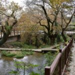 SOS για τα πλατάνια: Κίνδυνος αφανισμού για τα «δάση του νερού» στην Αιτωλοακαρνανία