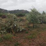 Μέσα Δεκέμβρη θα καταβληθούν οι οικονομικές ενισχύσεις του ΕΛΓΑ προς τους πληγέντες αγρότες από τον «Ιανό»