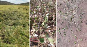 Ο «Ιανός» σάρωσε βαμβάκια, ρύζια και ελαιόδεντρα στην Αιτωλοακαρνανία