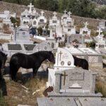 Ασύλληπτο! Βοσκούν άλογα μέσα στο νεκροταφείο στον Πρόδρομο Ξηρομέρου