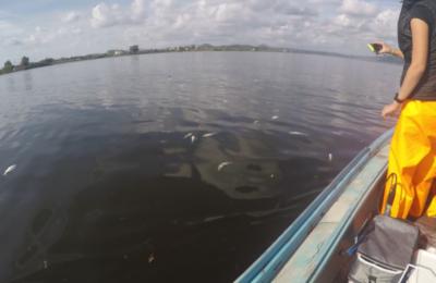 Αιτωλικό: Τα ψάρια φωνάζουν S.O.S, το «ανώτερο» ον τι κάνει;