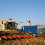 Η συγκομιδή καλαμποκιού στα Καλύβια