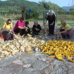 Αναβίωσαν τα λαογραφικά δρώμενα του τρύγου του καλαμποκιού στο Πετροχώρι