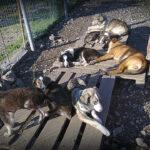 Στη Βουλή έφτασαν οι καταγγελίες για παράνομο καταφύγιο και παράνομες περισυλλογές ζώων στο Μεσολόγγι