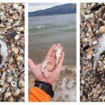 «Καληνύχτα» Λιμνοθάλασσα – Βρέθηκαν νεκροί ιππόκαμποι!