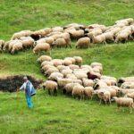 «Στρίμωγμα» Δημ. Κωνσταντόπουλου σε Σπ. Λιβανό για τα ζητήματα επιβίωσης των κτηνοτρόφων της Αιτωλοακαρνανίας