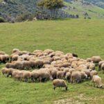 Σε κρίσιμη φάση η κτηνοτροφία μας: Απαιτούνται επειγόντως μέτρα στήριξης!